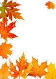 Bordo-folha do outono Imagens de Stock