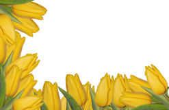 Bordo giallo dei tulipani Fotografia Stock