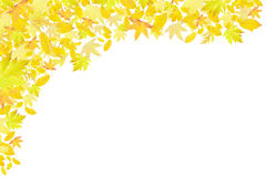 Bordo giallo di caduta dei fogli di autunno Immagine Stock