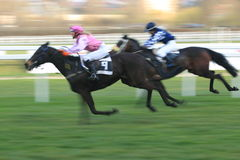 Bordo - horse racing in Prague Royalty Free Stock Photos