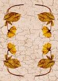 Bordo incrinato del fiore Fotografie Stock