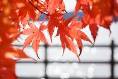Bordo japonês borrado e vermelho de Bokeh abstrato fotos de stock royalty free