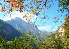 Bordo vermelho na área de montanha Fotos de Stock