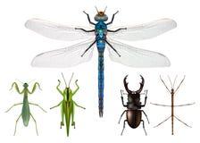 Bordo naturalistico di presentazione degli insetti visto da sopra illustrazione vettoriale