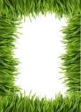 Bordo o blocco per grafici alto dell'erba Immagini Stock