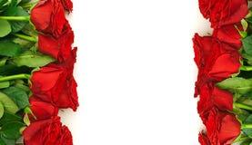 bordo rosso delle rose Immagine Stock