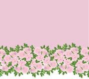 Bordo senza giunte del reticolo con i fiori Fotografia Stock