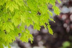 Bordo verde Imagem de Stock