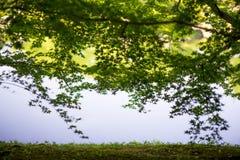 Bordo verde Fotografia de Stock Royalty Free