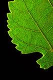 Bordo verde del foglio Fotografia Stock Libera da Diritti