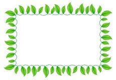 Bordo verde del foglio Fotografia Stock