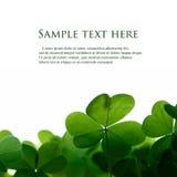 Bordo verde del trifoglio. fotografia stock libera da diritti