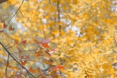 Bordo vermelho com fundo do amarelo um Imagem de Stock