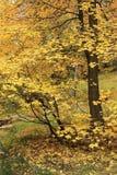 Bordos amarelos Imagens de Stock Royalty Free