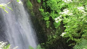 Bordos e samambaia em torno da cachoeira da floresta vídeos de arquivo