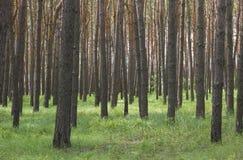 Bords de forêt Image stock