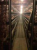 Bords de volaille d'animaux d'élevage de cages d'oiseaux de poulets Images stock