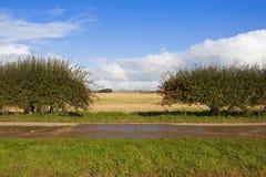 Bordure de haies d'aubépine en automne Image libre de droits