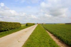 Bordure de haies de Bridleway et champ de blé Photographie stock libre de droits