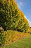 Bordure de haies et arbres en automne Images libres de droits