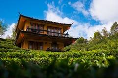 Bordure de maison de Hinese par le champ de thé Photographie stock libre de droits