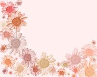 Bordure/fond en pastel de marguerite Images libres de droits