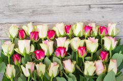 Bordure of pink and white roses on a light gray background.  Stock Photos