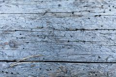 Bore burrow, destroyed holes in wood background.  stock photography