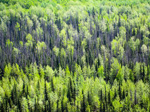 Boreal forest in Alaska Stock Images