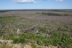 Boreal forest cut block. A hugh boreal forest cut block Stock Photo