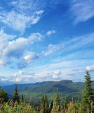 Boreal forest landscape Royalty Free Stock Image