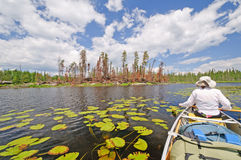 Boreal Forest and marshland in the north woods Royalty Free Stock Photography