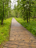Boreal forest taiga boardwalk Northern BC Canada Stock Photo