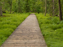 Boreal forest taiga boardwalk Northern BC Canada Stock Images