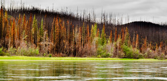 Boreal forest at Yuokon River destroyed by fire Stock Photos