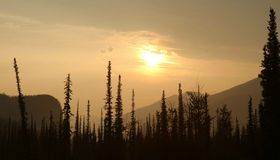 Boreal sunrise / alaska. Silhouettes of trees at an alaskan sunrise Stock Photo