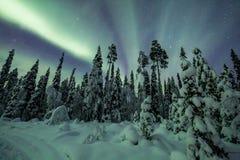 极光borealis (北极光)在芬兰,拉普兰森林 免版税库存照片