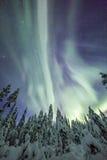 极光borealis (北极光)在芬兰,拉普兰森林 免版税图库摄影
