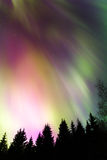Auroras sobre a floresta Foto de Stock Royalty Free