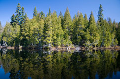 borealny las Obraz Royalty Free