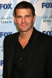 boreanaz david Royaltyfria Foton