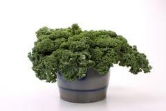Borecole in pot. Borecole cabbage in an old Delftware pot Stock Photos