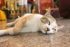 Bored cat lying Royalty Free Stock Photos