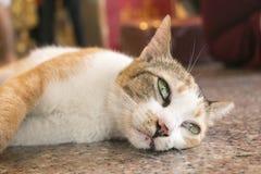 Bored cat lying Stock Photo