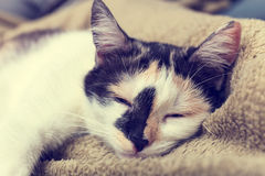 Bored cat Royalty Free Stock Photos