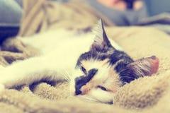 Bored cat Stock Image