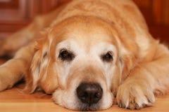 Bored dog Stock Photo