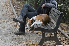 Bored dog on a bench