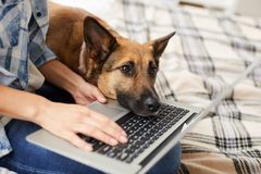 Bored Dog Waiting for Owner stock image