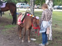 Bored girl standing with baby horse outdoor. Bored girl waiting for children to drive their on baby horse for the pay Royalty Free Stock Photo